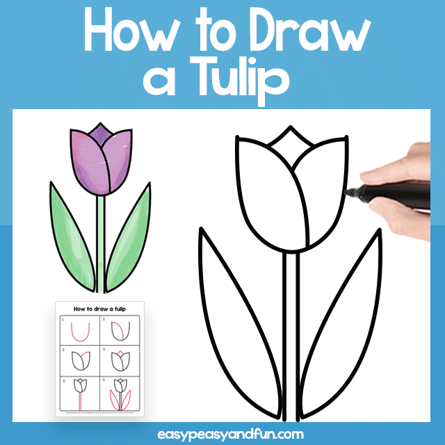 Tulip Guided Drawing Printable