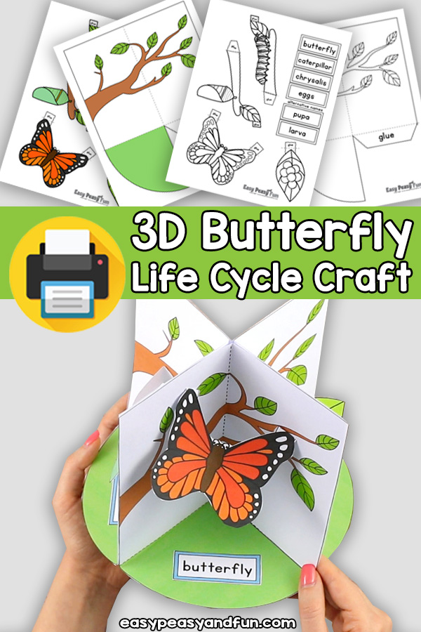 3D Life Cycle of a Butterfly Craft - Paper Model Diorama