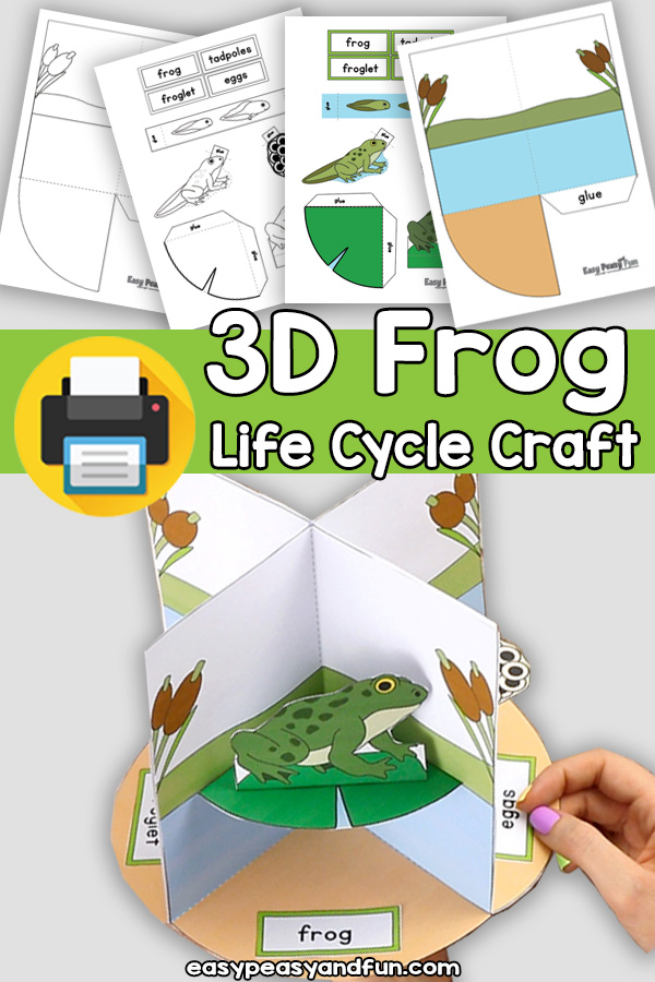 3D Life Cycle of a Frog Craft - Paper Model Diorama