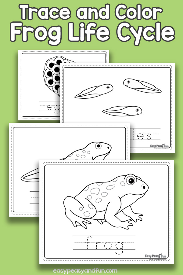 Vocabulary Frog Life Cycle Coloring Pages