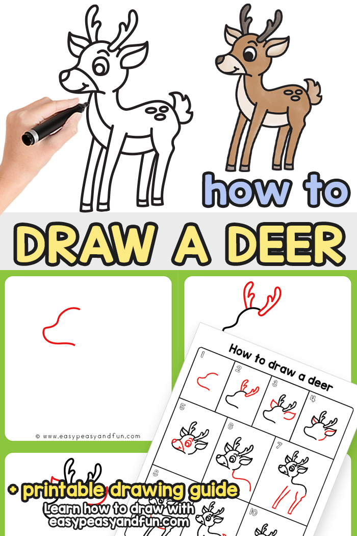 How to Draw a Deer Step by Step Tutorial